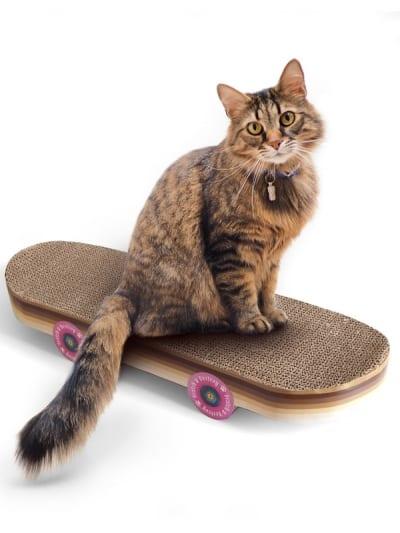 Suck UK - skateboard cat scratch, at is sat on a skateboard