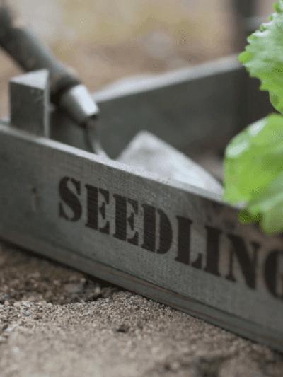 Garden Trading seedling tray