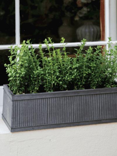 Garden Trading Steel Window Box