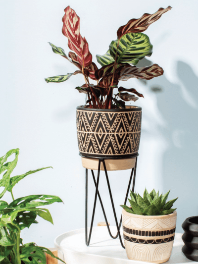 house plant in a nomad style planter with a wire stand
