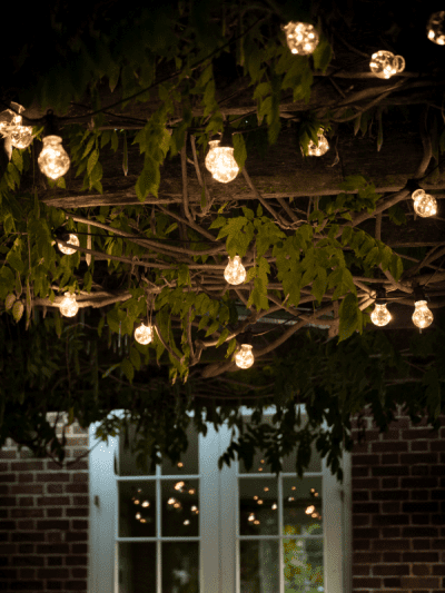 Bulb style lights hanging in a tree in a garden